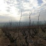 Néty - Les Terrains Rouges - Taille d'hiver