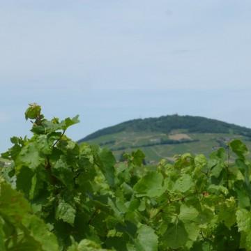 La Jonchère - Vue sur Mont Brouilly